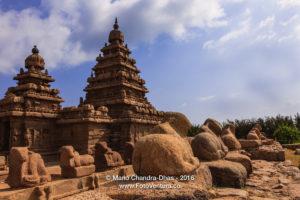 Mahabalipuram, India - 8th Century Shore Temple and Granite Cows