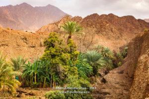 UAE: Date Palms and Fruit Trees in Arabian Desert Wadi.