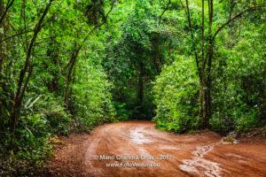 Brazil - The Rain forest Near Iguacu Falls © Mano Chandra Dhas